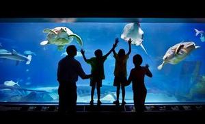 tennessee aquarium groupon